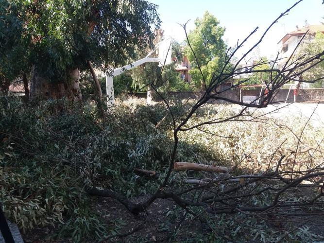 Απίστευτο και όμως αληθινό-Κλάδεψαν δέντρα στο 1ο Δημοτικό Αγρινίου και… τα παράτησαν!