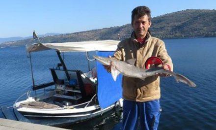 Γαλέο έπιασε Αμφιλοχιώτης ψαράς!